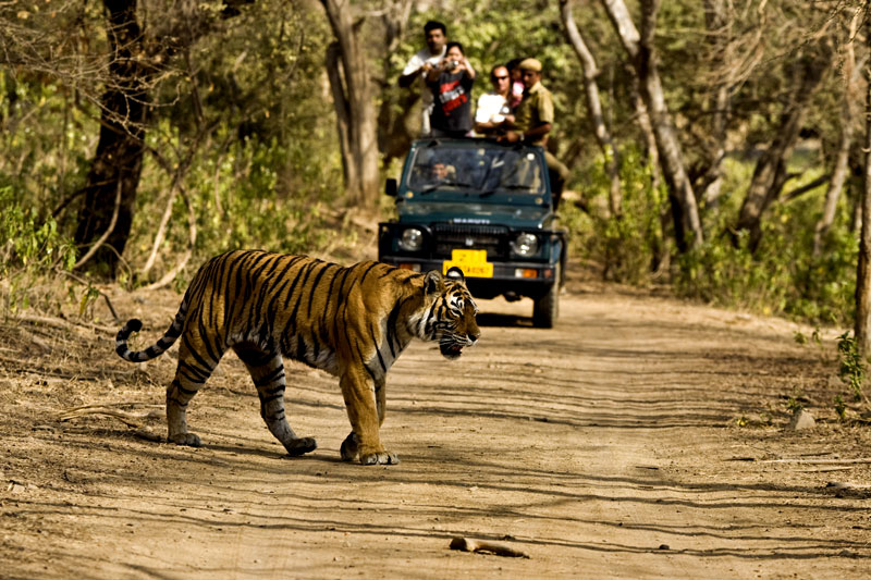 jim-corbett-tiger-national-park.jpg